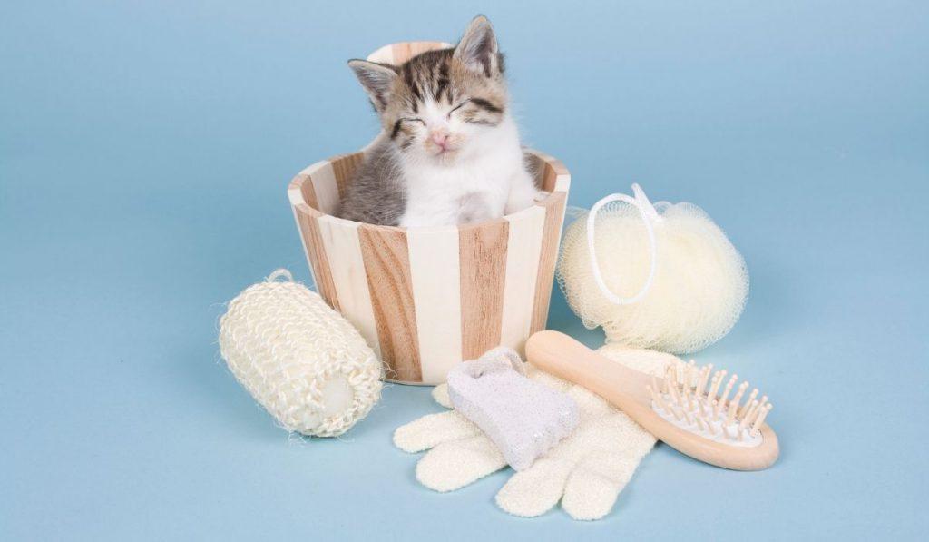 sleeping cat inside a tub with bath accessories